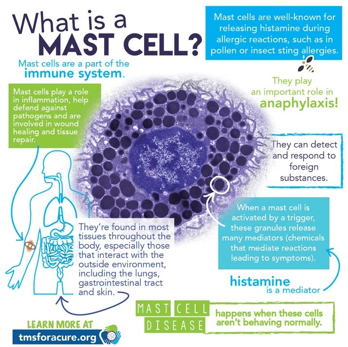 Biofeedback in Tucson AZ What is a Mast Cell