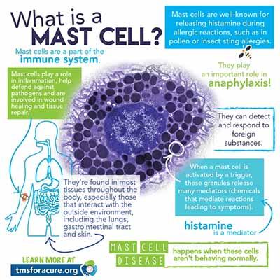 Neurofeedback Tucson AZ What Is A Mast Cell